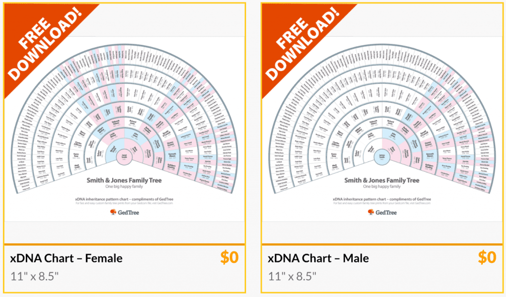 GedTree free downloads of xDNA charts